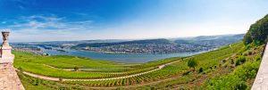 Blick über spätsommerliche Weinberge im Rheingau bei Rüdesheim