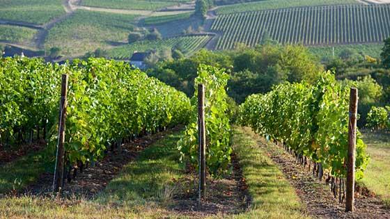 Campingbus mieten Bordeaux Wein