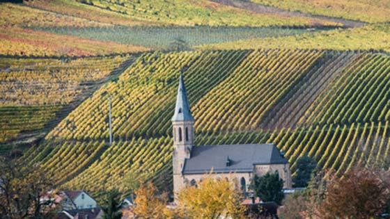 Roadtrip durch Deutschland Weinreben