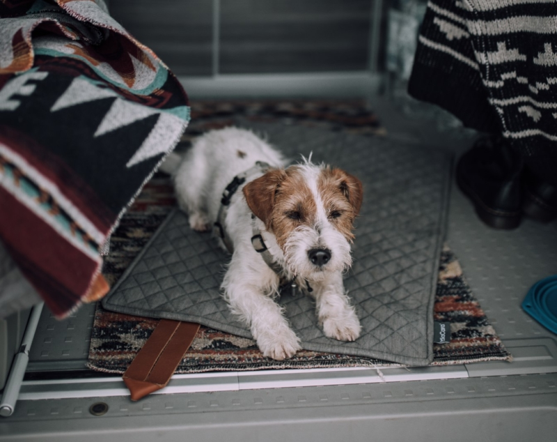 Alquilar camper apta para perros