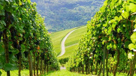 camper rental stuttgart vineyards