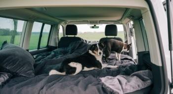 Dog suite road trip germany