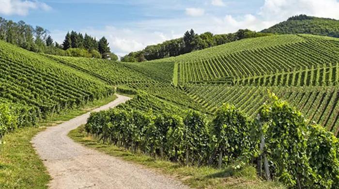 Stellplatz Weingut