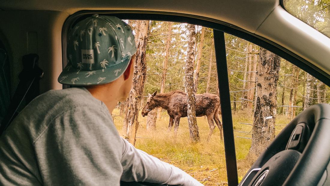 Wildcampen Schweden