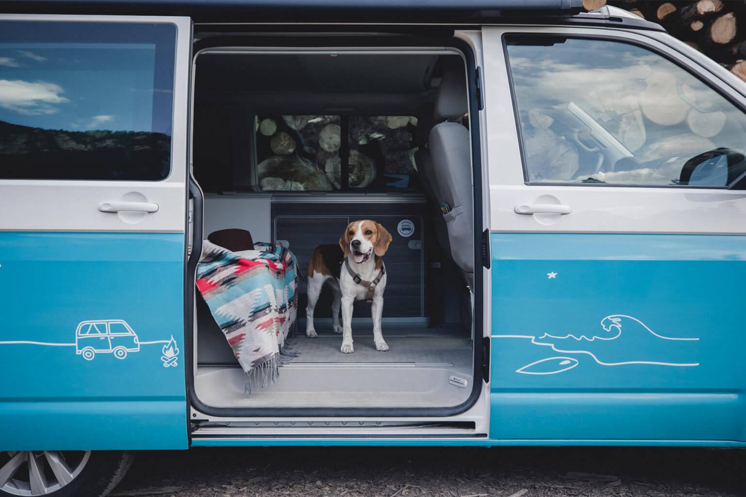 Campingbus mit Hund